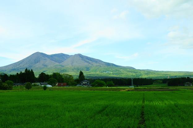 牧草畑とお山