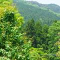 写真: 緑いろいろ
