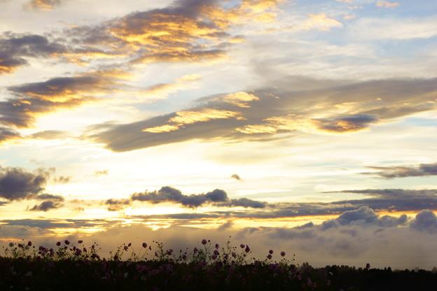 雲海とコスモス