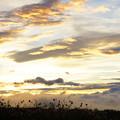 Photos: 雲海とコスモス