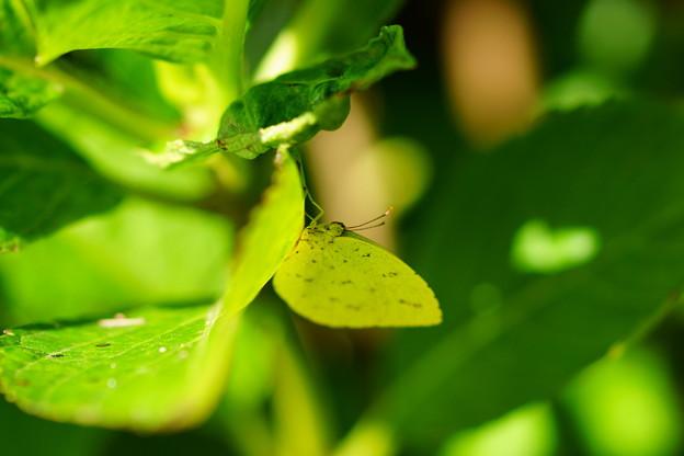 蝶々さん♪