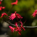 Photos: 盆栽の子