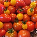 Photos: 菜園トマト