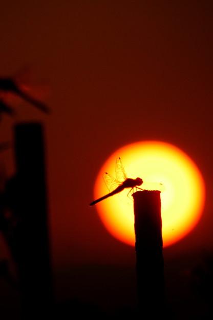 太陽とトンボ