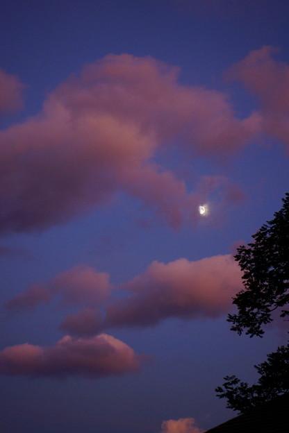 Photos: 夕月