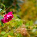 Photos: 秋色に染まり
