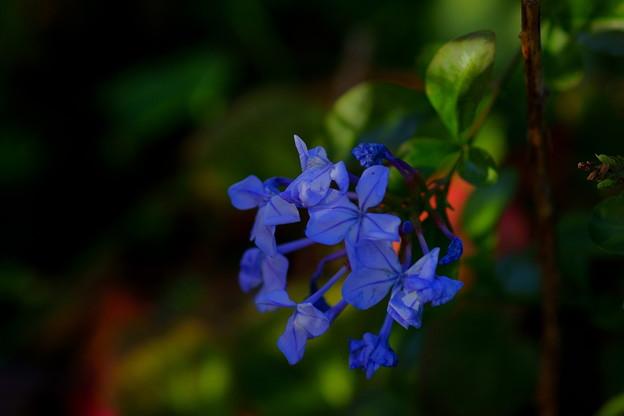 名残りの花と~