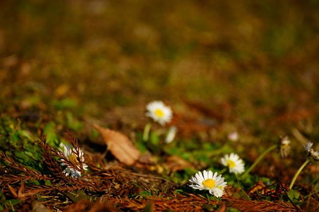野辺の花と