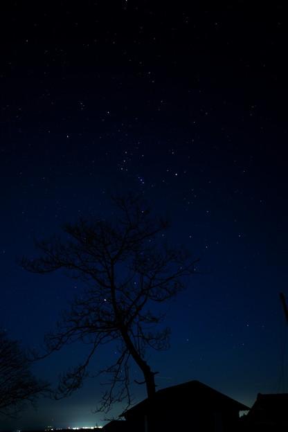 オリオン座と冬木立と街の灯り