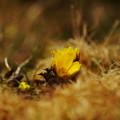 Photos: 野辺の花