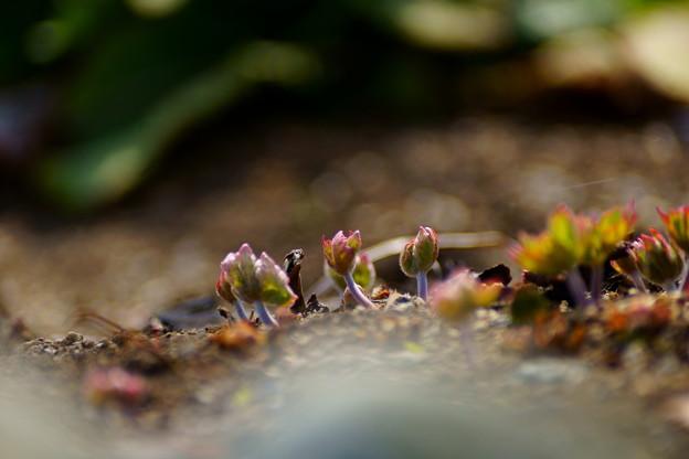 芽だしの季節