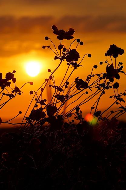 秋の日の出