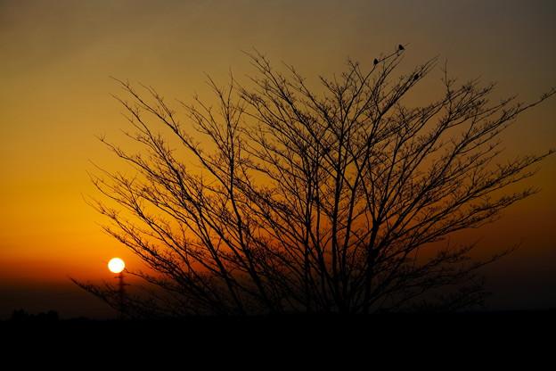 穏やかな夜明け