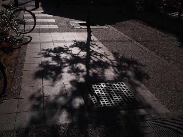 写真: 冬の木陰