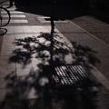 Photos: 冬の木陰
