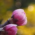 春の暖かさ