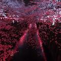 目黒川夜桜2