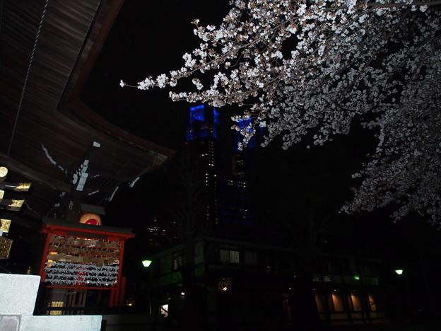 新宿熊野神社の桜