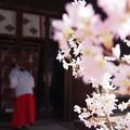 Photos: 川越 氷川神社1