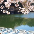 Photos: 鎌北湖の桜