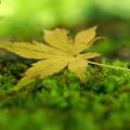 Photos: 夏の落葉
