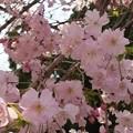 Photos: ピンクに癒され~ #桜 #千鳥ヶ淵