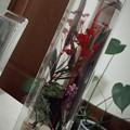 写真: プレゼントに嬉しいやつ☆色合い綺麗 #癒し #オイル漬け
