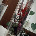 Photos: プレゼントに嬉しいやつ☆色合い綺麗 #癒し #オイル漬け