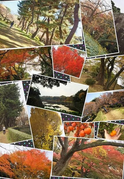 会社付近が京都(*≧∀≦*)都内で土の上を歩く幸せ☆