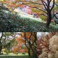 Photos: 素敵世界☆