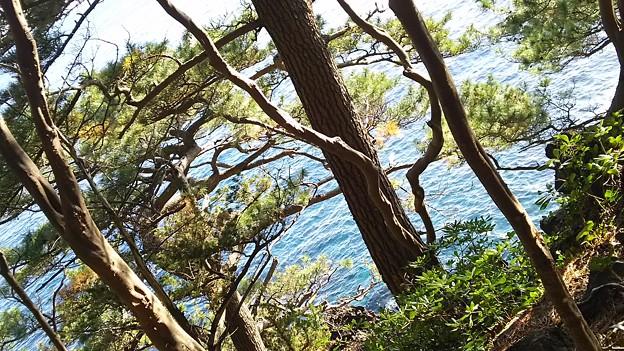 松の木と海が格好良い!和!
