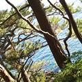 Photos: 松の木と海が格好良い!和!