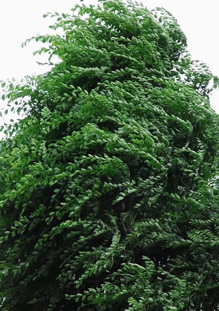 写真: 緑の風