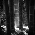 写真: 竹林/鎌倉・長谷寺