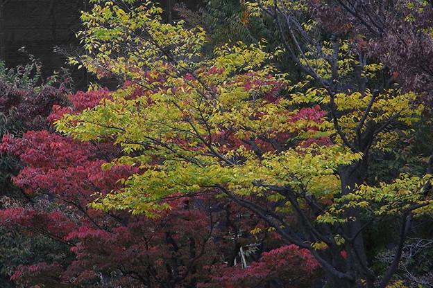 街路樹にも秋が来た