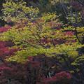 写真: 街路樹にも秋が来た