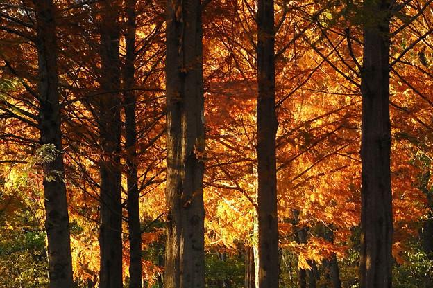 Photos: 森の輝き 2