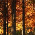 写真: 森の輝き 2
