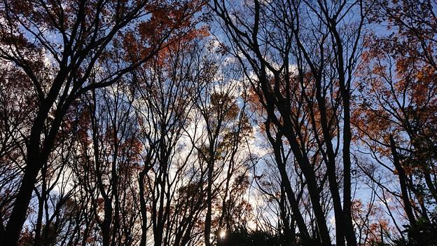 冬の雑木林