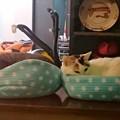 Photos: 猫良し
