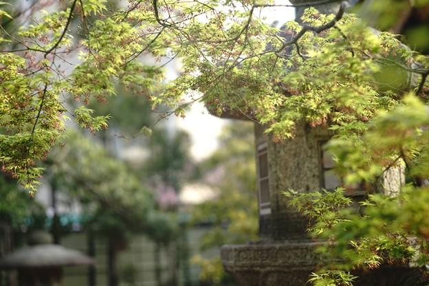 Photos: 季節の終わり繋がり