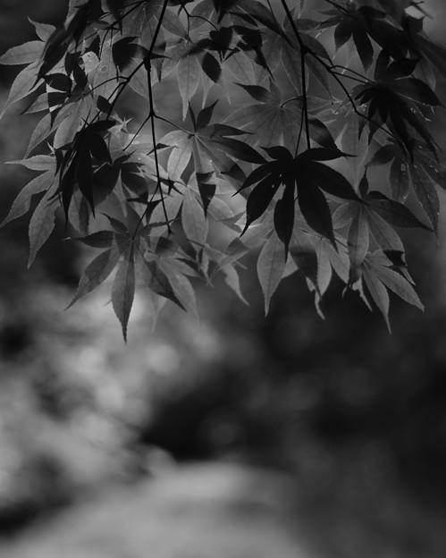 Photos: 優しい日差し85mm版