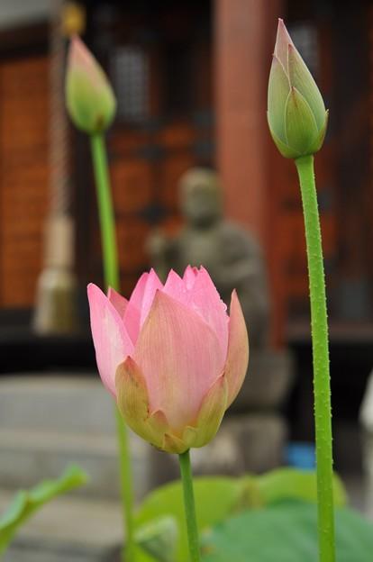 Photos: 極楽浄土
