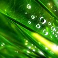 Photos: 素敵な水滴