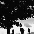 写真: セブンスターの木