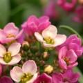 写真: 小さなお花畑
