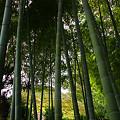 写真: 岡本古民家園
