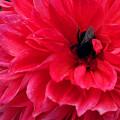 写真: お花ベッド