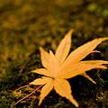 Photos: 苔むす秋