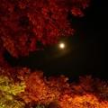 桜山公園-6